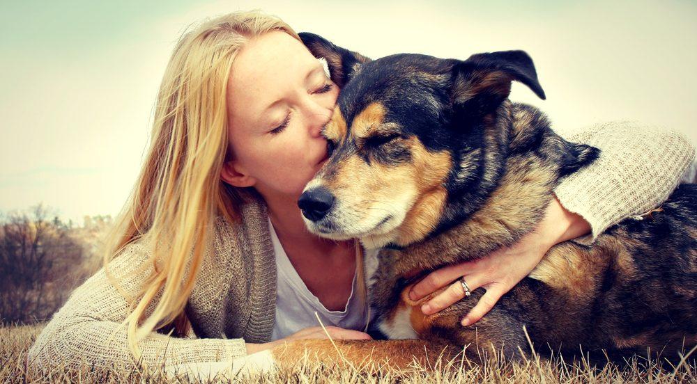 Tierversicherungen für Hunde und Katzen