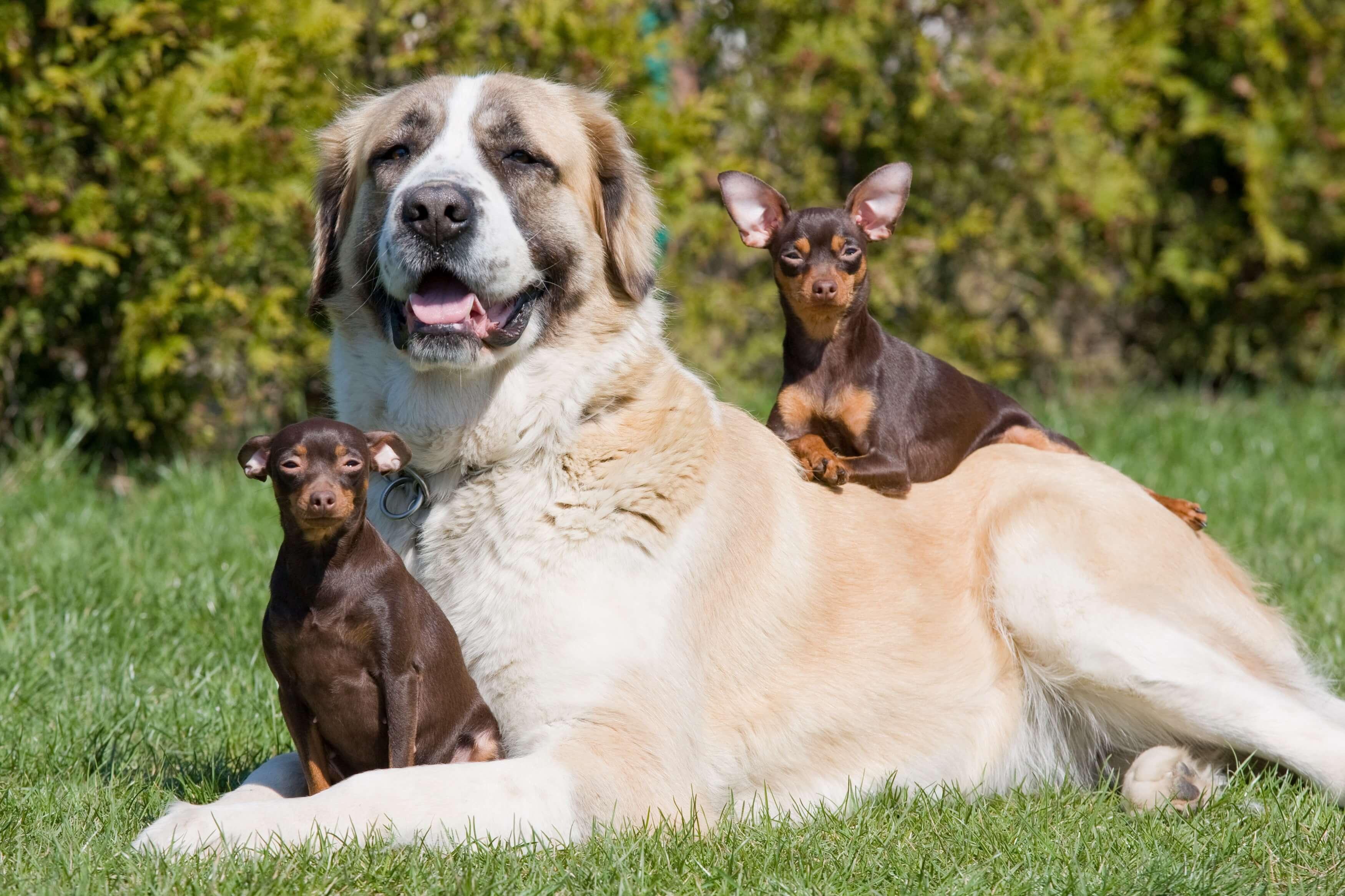 Anspruchsvoll Schöne Hunderassen Das Beste Von