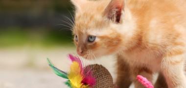 Kätzchen am spielen