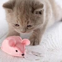 Süße Katze mit Spielzeug