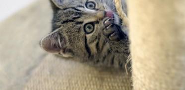 """kleine Katze beim """"Spielen"""" am Kratzbaum"""