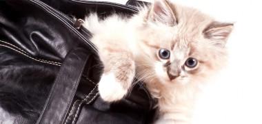 Katze in tasche