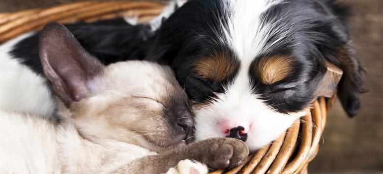 Süßer Hund und Katze im Körbchen