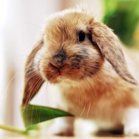 cute little rabbit with tulips