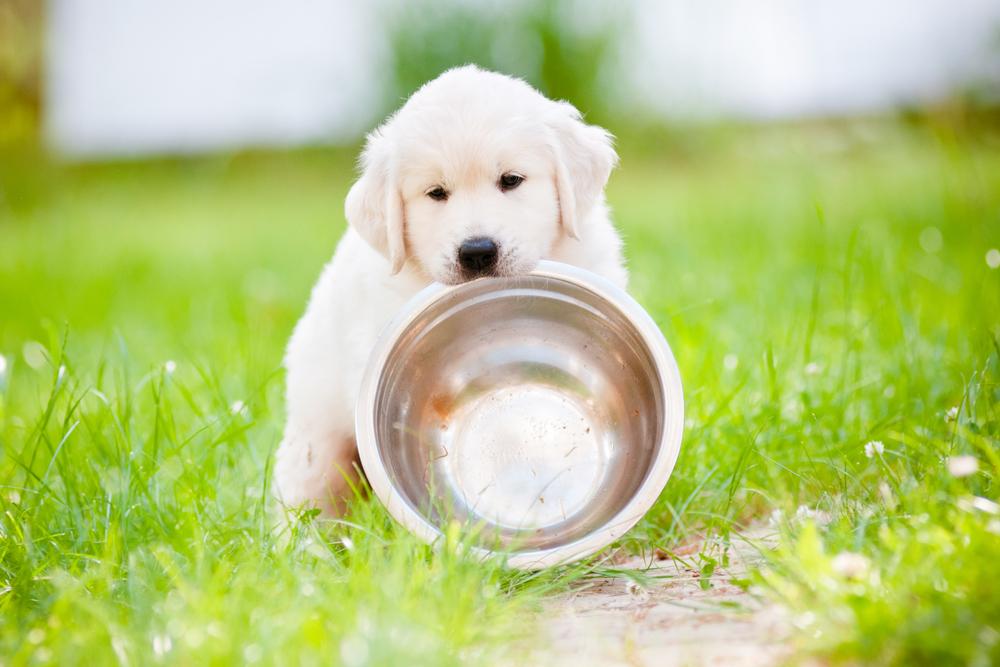 Arthrose beim hund symptome ursachen und die rolle der ernährung