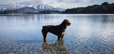 Hund Alpen See