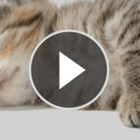 video_beitragsbild7
