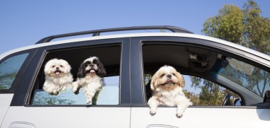 Hunde verreisen im Auto