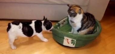 Video Hund Katze streit um Bett
