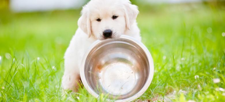 süßer Hund mit Napf