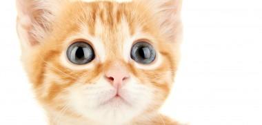 red_kitten_kopf