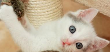 Katzenbaby-spielt-mit-kratzbaum