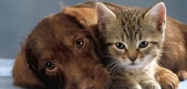 Hund-+-Katze