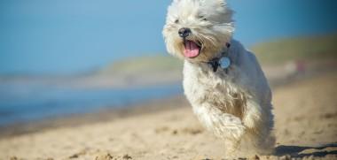 Hund am Strand 2