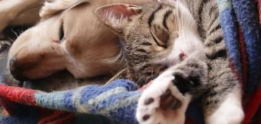 Hund und Katze schlafen