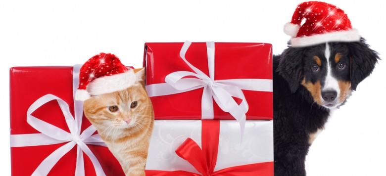 Hund Katze Geschenk