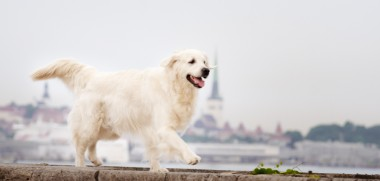 Hund Mauer