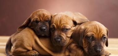 Hunde kuscheln