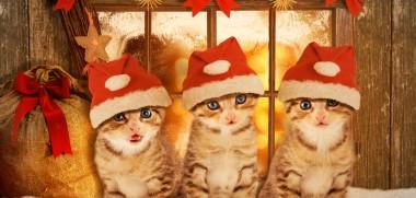 Katzen Weihnachten