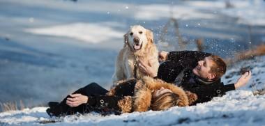 paar-schnee-hund