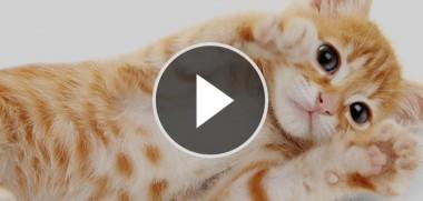 video_beitragsbild6