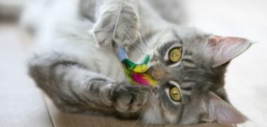 Katze-Katzenangel-Spielen