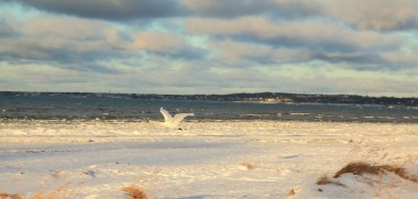 Ostsee Winter