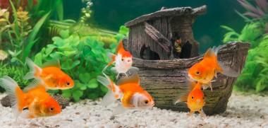 Fische_Aquarium_335496737