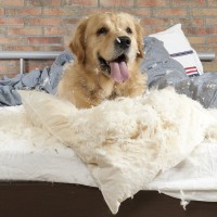 Hund Bett Kissen