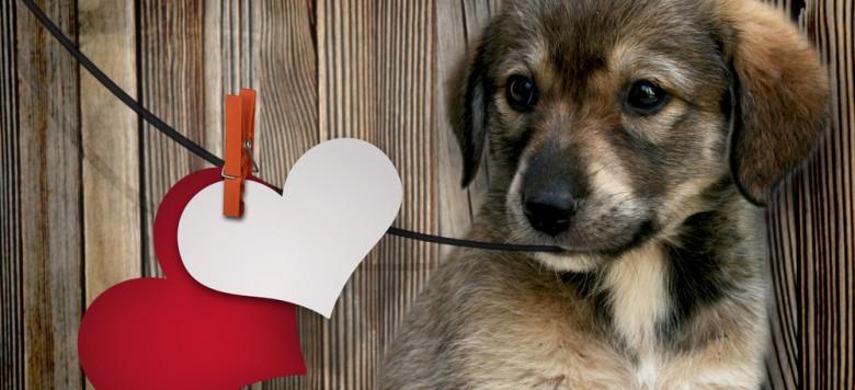 Hund Herz