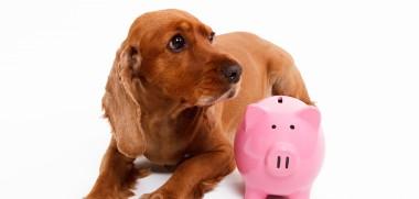 Hund Sparschwein