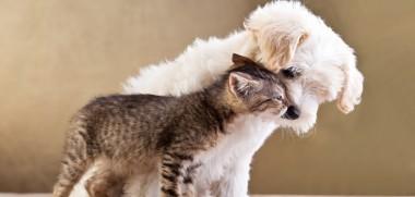 Hund und Katze Freunde
