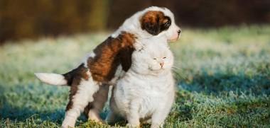 Hund und Katze auf Wiese
