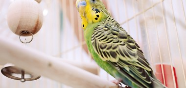 Vogel Voliere