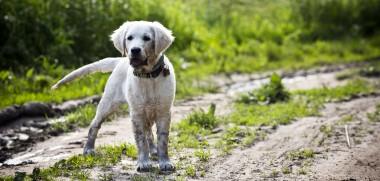 hund schmutz
