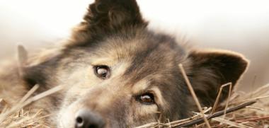 schöner Hund