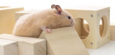 shutterstock_182970356_hamster