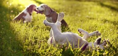 hunde spiele online mit anmeldung