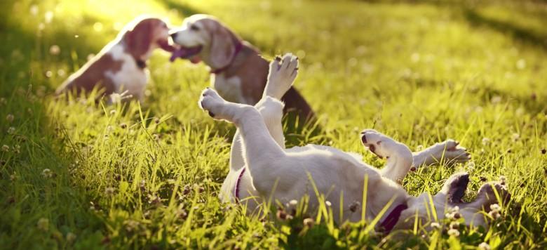 Hund spielen Wiese