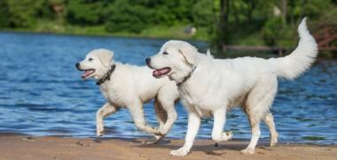 Hunde am See_371336950