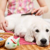Hund wellness
