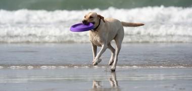 Hund Meer