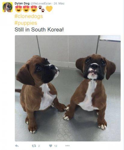 Hundeklon