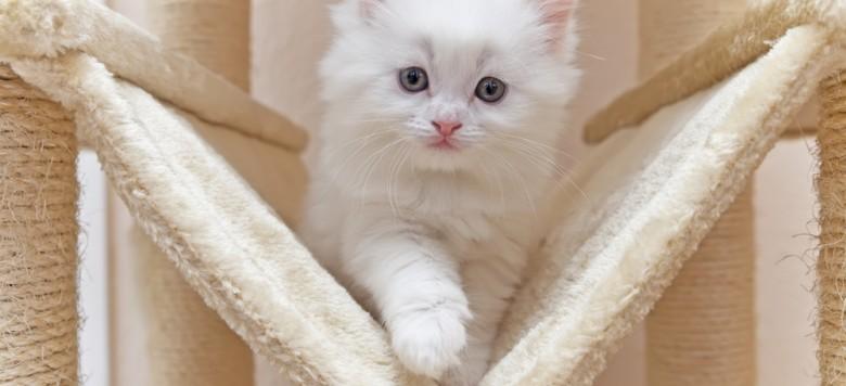 süße Katze auf kratzbaum