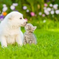 walpe mit kitten_329141111