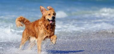 Hund Strand Sonne - Kopie