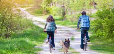 Hund_Fahrrad_207804673