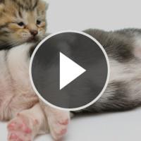 video_beitragsbild5