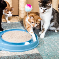 Team Play five domestic cats together at play station