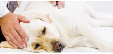 hund krank_174187382